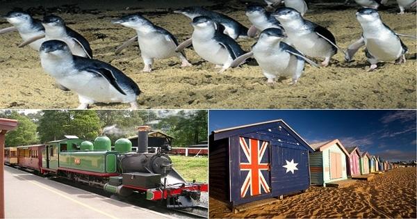 墨爾本旅遊行程:彩色小屋+蒸氣火車+菲利浦島企鵝 代號:BDP