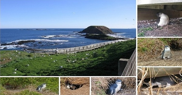 企鵝島海豹岩