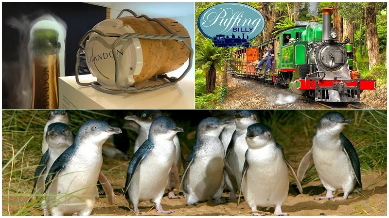 墨爾本旅遊行程-代號YDP-亞拉河谷酒莊+丹頓農山蒸汽火車+菲利浦島企鵝