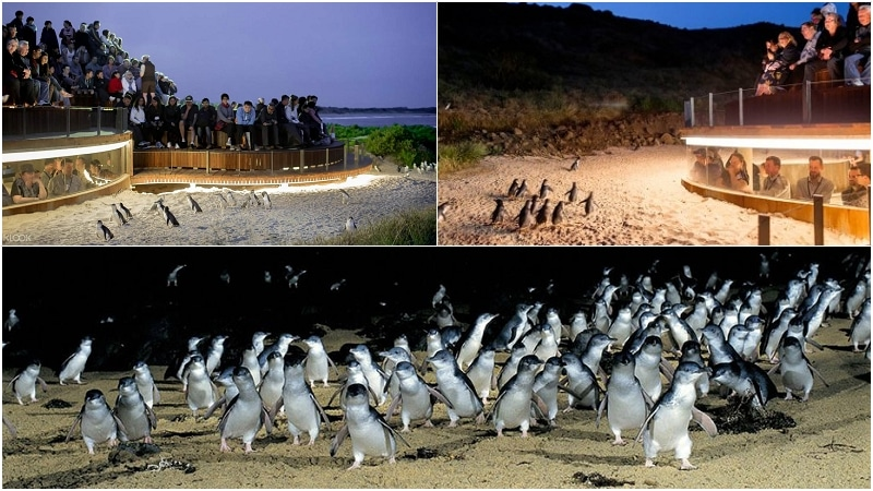墨爾本企鵝保育中心