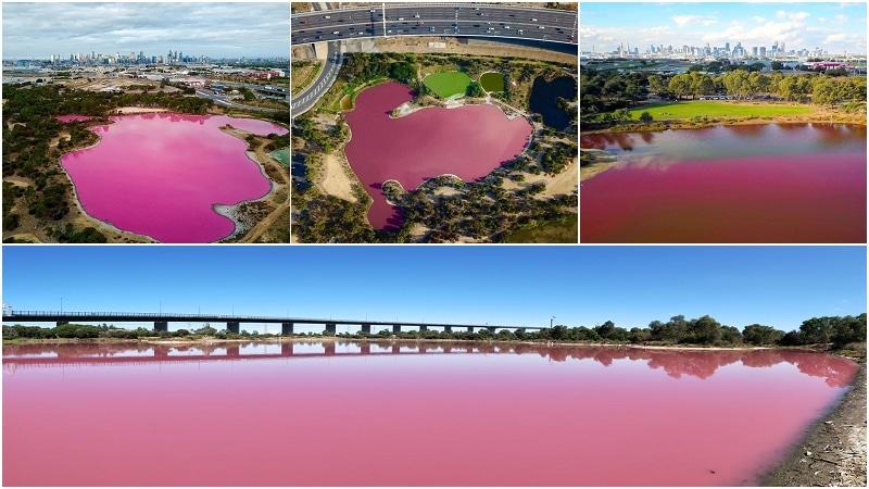 墨爾本粉紅湖